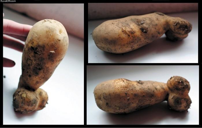 сексуальный картофель надя как
